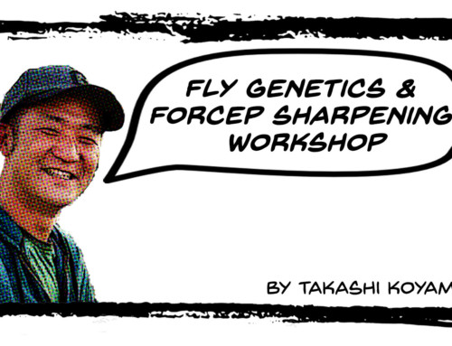 Fly Genetics and Forcep Sharpening Workshop